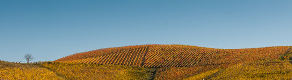 Blanket Vineyard - by Roberto Faccenda (creative commons)