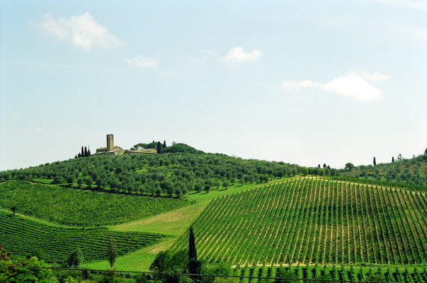 Vineyards in Tuscany || creative commons photo by Paolo Bertinetto