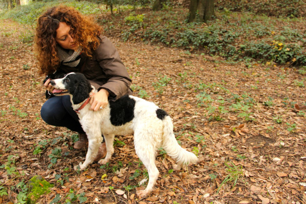 Truffle-hunting dog in Italy || creative commons photo by Micheal Simoncini