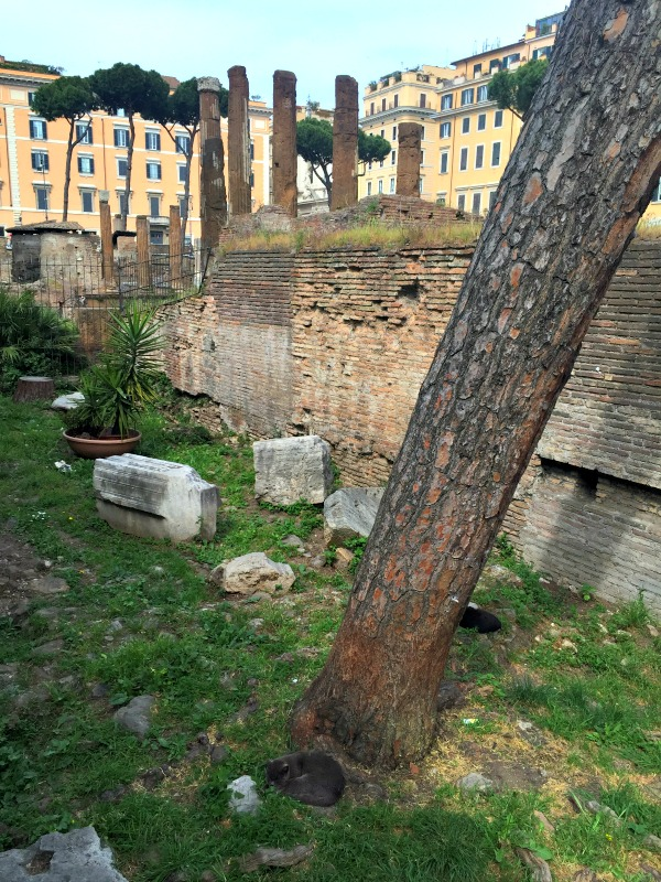 Largo di Torre Argentina || photo by Jessica Spiegel, all rights reserved, may not be used without permission